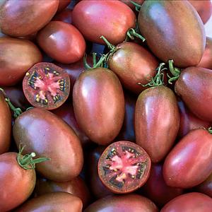 tomate Purple Russian